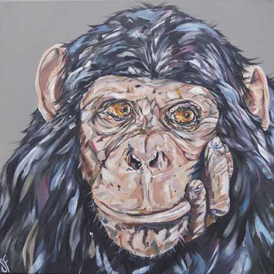 'I don't give a monkey's…'