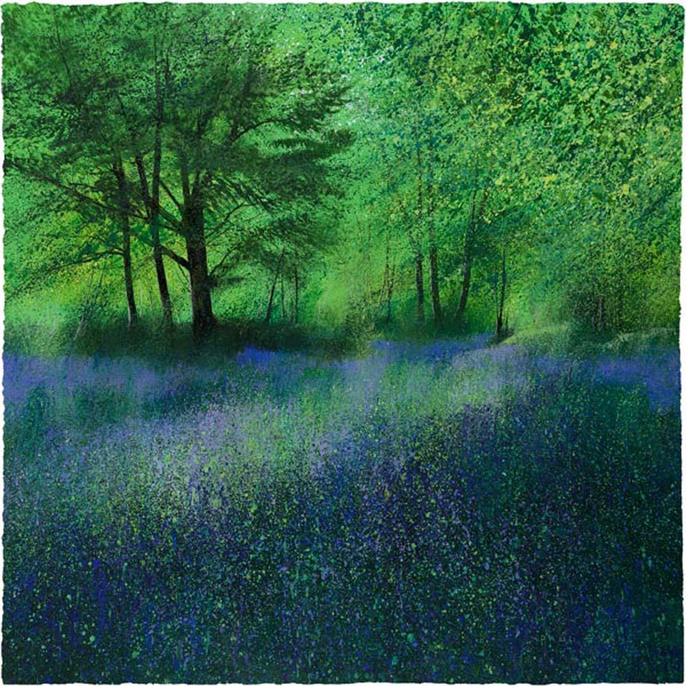 Secret Bluebells by Paul Evans