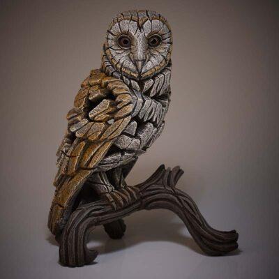 Barn Owl by Matt Buckley